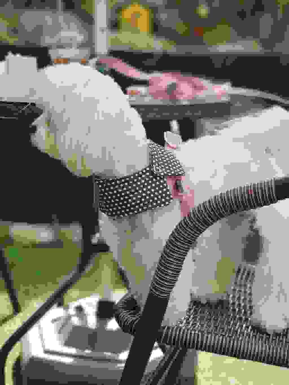 포카 초경량 앞섬방지 하네스 단품  리뷰 후기