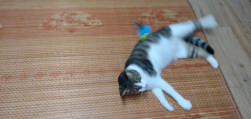 힐링타임 플라잉 사탕참새 3단낚시대 고양이 장난감 + 리필  리뷰 후기