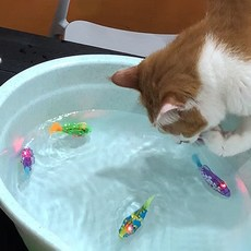 묘심 LED 로봇 물고기 고양이 장난감 4p 세트, 랜덤 발송, 1세트